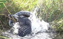 Cuộc chiến khốc liệt giữa cá sấu và trăn Miến Điện khổng lồ