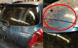 Xôn xao chiếc ô tô bị rễ cây bám dày đặc