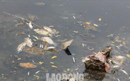 Nước sông Tô Lịch đen trở lại, xuất hiện cá chết trắng nổi lềnh bềnh