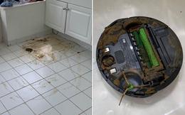 Hãy xem thảm cảnh xảy đến khi bạn mua robot hút bụi về mà nhà lại nuôi chó