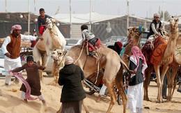 Kỳ thú cuộc đua lạc đà của những cậu bé giữa sa mạc Ai Cập
