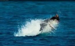 Video: Xem cá vẩu phô diễn kỹ năng bắt chim tuyệt đỉnh