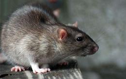 Chỉ nhặt 1 con chuột chết, chàng trai trẻ nhanh chóng trở nên giàu có theo cách không ngờ