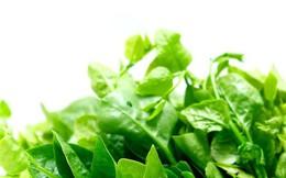 Ăn rau mồng tơi mà không nắm được những lưu ý cực quan trọng này sẽ gây hại sức khỏe
