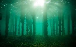 Bí ẩn khu rừng 10.000 năm tuổi ngoài khơi Lithuania