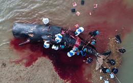 24h qua ảnh: Khám nghiệm xác cá voi khổng lồ dạt vào bờ biển