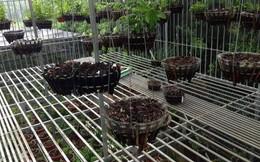 Sau 1 đêm ngủ dậy, vườn lan trị giá 2 tỷ đồng bị trộm khoắng sạch
