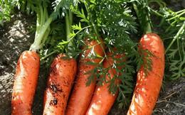 """Tranh cãi nảy lửa: Tên gọi khác của """"cà rốt"""" là... """"củ cải đỏ"""", câu trả lời ai đúng ai sai!?"""