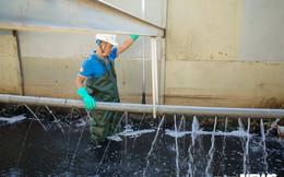 Ảnh: Cận cảnh đáy sông Tô Lịch sau 3 tuần thí điểm công nghệ Nhật Bản phân hủy bùn hữu cơ