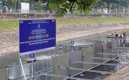 Sông Tô Lịch đang dần 'hồi sinh' nhờ công nghệ Nhật Bản?