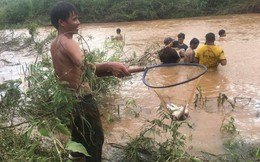 Ảnh: Sau mưa lớn khủng khiếp, dân Đắk Lắk hò nhau đi bắt cá