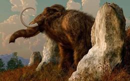 Điều gì sẽ xảy ra nếu động vật đã tuyệt chủng như khủng long, voi ma mút hồi sinh?