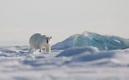 """Không còn nơi nào an toàn: Các nhà khoa học tìm thấy """"hạt vi nhựa"""" ở Bắc Cực"""