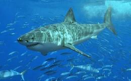 Điều gì sẽ xảy ra nếu bạn rơi vào khu vực đầy cá mập?