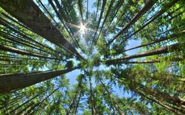 Các nhà khoa học cảnh báo: Cây xanh phát triển nhanh do hấp thụ CO2 nhưng điều này chỉ diễn ra được 80 năm nữa