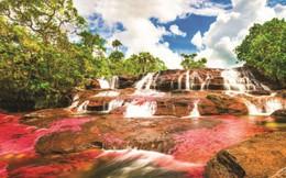 """Độc đáo """"dòng sông 5 màu"""" ở Colombia"""