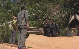 """Đội đặc nhiệm mật phục 5 tháng bắt quả tang trưởng thôn phá rừng, xẻ nhiều cây gỗ """"khủng"""""""