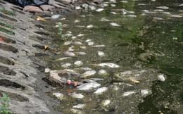 [Ảnh] Cá chết nổi trắng hồ Trúc Bạch, dân bỏ thói quen thể dục quanh hồ, quán xá thưa thớt khách