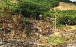 Chia chác 5 tỉ tiền đền bù đất rừng, 10 cán bộ bị khởi tố