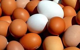 Đây là lý do bạn nên thường xuyên ăn trứng vào buổi sáng