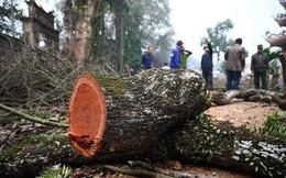 Số phận lô gỗ sưa trăm tỉ ở Hà Nội sẽ được định đoạt ra sao?