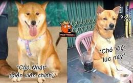 """Chú chó gốc Nhật trúng vai """"Cậu Vàng"""" khiến dân mạng gay gắt: """"Việt Nam đâu thiếu chó khôn?'"""