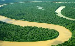 Rừng Amazon tạo ra được bao nhiêu oxy cho thế giới? Hóa ra không nhiều như bạn nghĩ