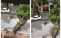 Hà Nội mưa lớn, hình ảnh cây đổ được cập nhật liên tục trên MXH: Nhiều ô tô bị đè trúng