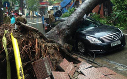 Cây đổ hàng loạt, đè trúng ô tô, hiện trường tan hoang ở Hà Nội và các tỉnh phía Bắc khi bão số 3 quét qua