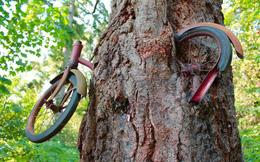 Thiên nhiên không chỉ đẹp mà còn kỳ lạ đến không tưởng (P2): Cây xanh nuốt chửng xe đạp