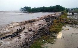 Cà Mau xin hỗ trợ khẩn cấp 226 tỉ đồng bảo vệ đê biển Tây