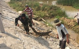 """Dân hoảng sợ khi thấy cá sấu """"khủng"""" bơi trên sông, chính quyền cử người đi bắt"""