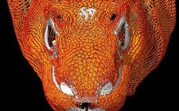 Giới khoa học ngạc nhiên với cấu trúc bộ xương đặc biệt của rồng Komodo