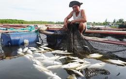 Vụ cá chết hàng loạt trên sông: Do độ mặn giảm đột ngột làm cá bị sốc