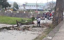 Nữ sinh bị cành cây rơi trúng đầu tử vong trên đường đi ôn thi học sinh giỏi