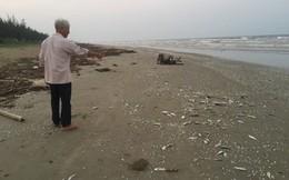 Cá chết dạt trên 4km bờ biển, người dân phát hiện đáy lưới giã cào đứt nghi là nguyên nhân