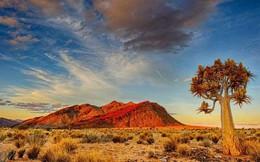 Những sa mạc đẹp nhất trên Trái Đất