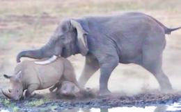 Cậy thân xác to lớn, voi già xua đuổi mẹ con tê giác chạy... chối chết