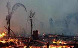 7 nước ký thỏa thuận bảo vệ rừng nhiệt đới Amazon