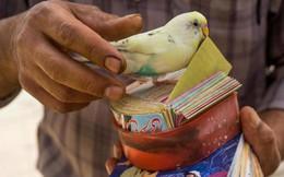 Truyền thống bói toán kỳ lạ nhất của người Iran: Bói mọi lúc mọi nơi, vận mệnh đôi khi phụ thuộc vào một con chim