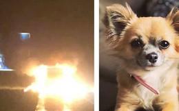 Tưởng chủ nhân vẫn còn kẹt trong xe tải bốc cháy, chú chó nhảy vào cứu thì chiếc xe phát nổ