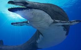Quái vật tiền sử 'thằn lằn chúa' chuyên săn cá voi được phát hiện ở Ai Cập