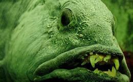 Con cá này xấu đau đớn nhưng người ta vẫn săn bắt nó đến mức sắp tuyệt chủng