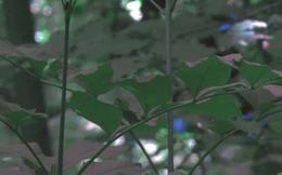Nếu bạn thắc mắc cây hiện ra trong mắt chim như thế nào, thì mời bạn xem ảnh