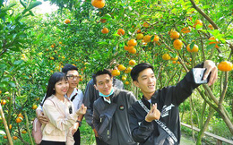 Thị trường hàng Tết: Hoa quả độc lạ lên ngôi