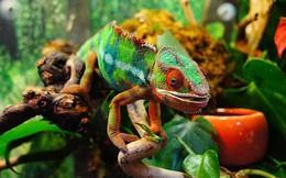 5 loài động vật có khả năng thay đổi màu sắc thần kỳ