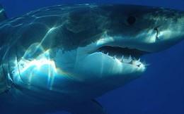 Bí ẩn loài cá mập khổng lồ thời tiền sử