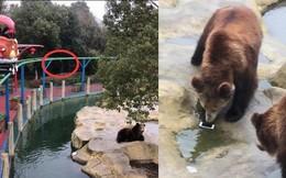 Toan ném táo cho gấu ăn, nữ du khách lại ném nhầm iPhone