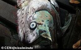 Bắt được cá rồng biển, người dân lo sắp có động đất, sóng thần