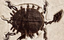 Phát hiện khối u ác tính ở hoá thạch rùa 240 triệu năm tuổi